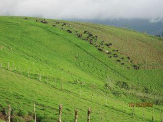 Costa Rica, pays d'élevage