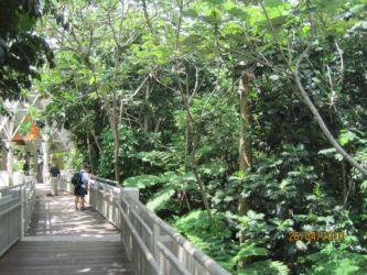 Entrée de la forêt d'El Yunque