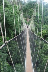 Kakum National Park, pont de liane