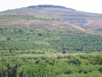Les collines du Djebel Ansarié, vues du Krak