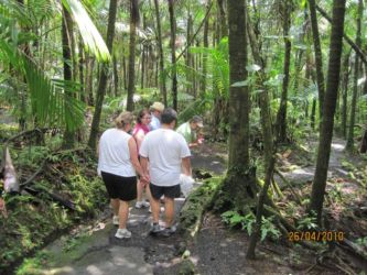Marche dans la forêt d'El Yunque