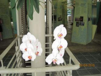 Orchidées de Porto Rico