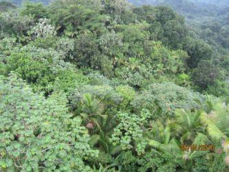 Paysage d'El Yunque