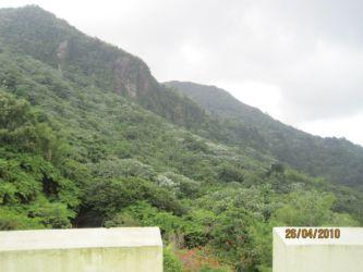 Paysage depuis El Yunque