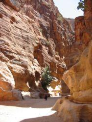 Petra, le Siq (défilé de 1,2 km)