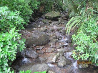 Rivière dans la forêt d'El Yunque