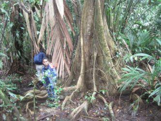 Tortugero, marche dans la forêt tropicale