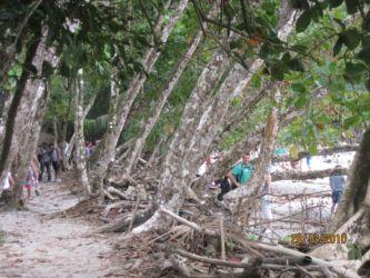 Végétation en bordure de plage