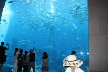 Atlantis Hôtel, l'aquarium