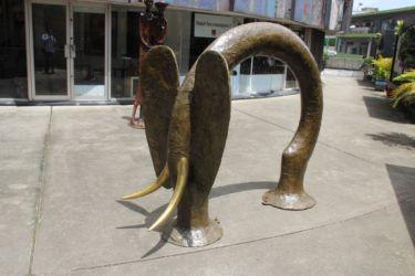 Eléphant (3)