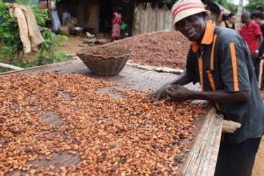 Cacaoculteurs de Kodjina