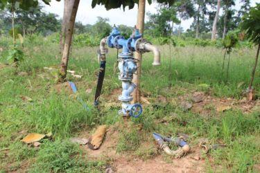 Irrigation cacao à Cotokonou (Est de la Côte d'Ivoire)