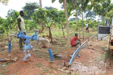 Irrigation du cacao