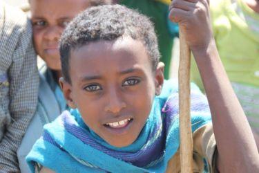 Petit berger de Gondar
