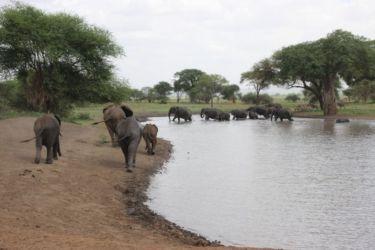 Eléphants à la mare