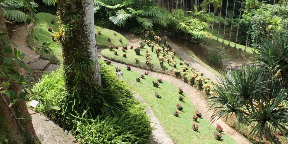 Martinique 3/7 : Balata